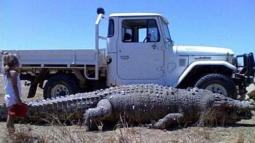 Meanwhile-In-Australia-5.jpg.1c967493753