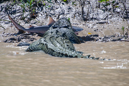 crocodile-shark-20140806-103004-012.png.
